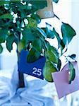 Advent calender hanging on a lemon tree Stock Photo - Premium Rights-Managed, Artist: Photocuisine, Code: 825-06049071