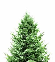 snow christmas tree white - Green Pine decoration for Christmas Stock Photo - Royalty-Freenull, Code: 40