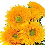 Sunflower arrangement over white background. Stock Photo - Royalty-Free, Artist: marilyna                      , Code: 400-06062106
