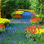 Keukenhof Gardens, Lisse, Netherlands Stock Photo - Royalty-Free, Artist: phbcz                         , Code: 400-06064306