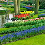 Keukenhof Gardens, Lisse, Netherlands Stock Photo - Royalty-Free, Artist: phbcz                         , Code: 400-06064309