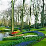 Keukenhof Gardens, Lisse, Netherlands Stock Photo - Royalty-Free, Artist: phbcz                         , Code: 400-06064310