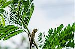 Lizard on the tree in green nature or in park or in the garden