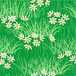 camomile on green grass field seamless background pattern Stock Photo - Royalty-Free, Artist: 100ker                        , Code: 400-06073443