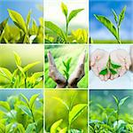 Tea leaves wallpaper background, all image belongs to me. Stock Photo - Royalty-Free, Artist: szefei                        , Code: 400-06077331