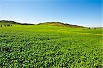 Green Field in Israel, Spring