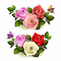 Roses with butterflies on white background Stock Photo - Royalty-Freenull, Code: 400-06082389