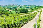 vineyars in Asti Region, Piedmont, Italy Stock Photo - Royalty-Free, Artist: phbcz                         , Code: 400-06083843