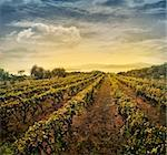 Beautiful vineyard landscape with rows of vines and sea with sunset in the background Stock Photo - Royalty-Free, Artist: mythja                        , Code: 400-06090189