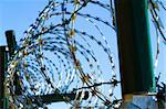 barbed wire against blue sky as war background Stock Photo - Royalty-Free, Artist: jonnysek                      , Code: 400-06093674