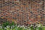 Old brick wall and daisies Stock Photo - Royalty-Free, Artist: Dutourdumonde                 , Code: 400-06096265