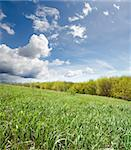 green grass near wood under cloudy sky Stock Photo - Royalty-Free, Artist: mycola                        , Code: 400-06102742