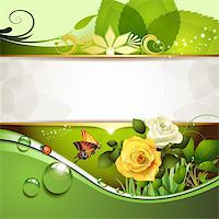 Springtime background with roses and butterfly Stock Photo - Royalty-Freenull, Code: 400-06103271