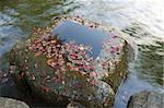 red maple tree leafs lay over water in stone pot and flowing water in zen-garden Stock Photo - Royalty-Free, Artist: yuriz                         , Code: 400-06105459