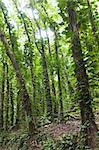 Dense rain forest with tall trees covered with other plants Stock Photo - Royalty-Free, Artist: nazzu                         , Code: 400-06105574