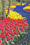 Keukenhof Gardens, Lisse, Netherlands Stock Photo - Royalty-Free, Artist: phbcz                         , Code: 400-06105680