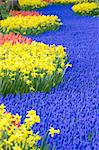 Keukenhof Gardens, Lisse, Netherlands Stock Photo - Royalty-Free, Artist: phbcz                         , Code: 400-06105683