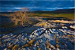 Yorkshire Dales, Yorkshire, Yorkshire and the Humber, England Stock Photo - Premium Royalty-Free, Artist: Jason Friend, Code: 600-06109536