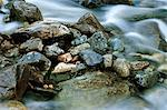 Close-up of rocks in rapid stream water Stock Photo - Premium Royalty-Free, Artist: Jose Luis Stephens, Code: 698-06116597