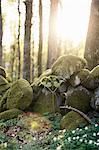 Stones covered with moss in forest Stock Photo - Premium Royalty-Free, Artist: Water Rights, Code: 698-06116609