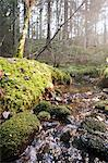 Water stream flowing through mossy stones in forest Stock Photo - Premium Royalty-Free, Artist: Beyond Fotomedia, Code: 698-06116615