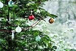 Christmas tree, close-up Stock Photo - Premium Royalty-Free, Artist: Susan Findlay, Code: 632-06118429