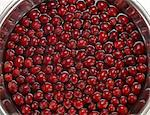 Fresh Cranberries Soaking in Water Stock Photo - Premium Royalty-Free, Artist: Photocuisine, Code: 618-06119142
