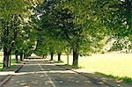 Tree lined road Stock Photo - Premium Royalty-Free, Artist: Robert Harding Images, Code: 618-06119301
