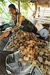 Woman Selling Palm Sugar at Roadside Stand, Sukhothai, Thailand Stock Photo - Premium Rights-Managed, Artist: dk & dennie cody, Code: 700-06119549