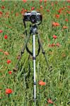 Camera on Tripod in Poppy Field Stock Photo - Premium Rights-Managed, Artist: Jean-Christophe Riou, Code: 700-06119772