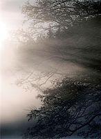 morning fog Stock Photo - Royalty-Freenull, Code: 400-06128563