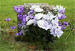 Purple and white flowers on a grave, Batsford church, Gloucestershire, England, uk Stock Photo - Royalty-Free, Artist: gynane                        , Code: 400-06129323