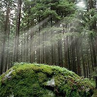 Forest Stock Photo - Royalty-Freenull, Code: 400-06134197