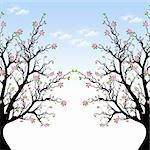 Beautiful blossom tree and blue sky Stock Photo - Royalty-Free, Artist: inbj                          , Code: 400-06136284