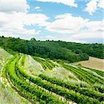 vineyards, Eko Hnizdo, Czech Republic Stock Photo - Royalty-Free, Artist: phbcz                         , Code: 400-06137972