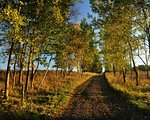 A small way between autumn autumn colored trees Stock Photo - Royalty-Free, Artist: ondrej83                      , Code: 400-06140425
