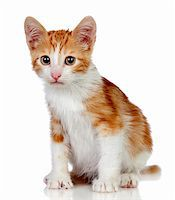 Adorable little cat isolated on white background. Stock Photo - Royalty-Freenull, Code: 400-06141789