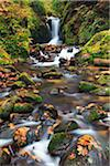 Geroldsau Waterfall in Autumn, Black Forest, Germany Stock Photo - Premium Royalty-Free, Artist: F. Lukasseck, Code: 600-06144753