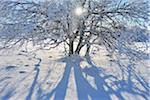 Snow Covered Tree with Sun, Heidelstein, Rhon Mountains, Bavaria, Germany Stock Photo - Premium Royalty-Free, Artist: Raimund Linke, Code: 600-06144765