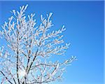 Snow Covered Maple Tree with Sun, Wustensachsen, Rhon Mountains, Hesse, Germany Stock Photo - Premium Royalty-Free, Artist: Raimund Linke, Code: 600-06144844