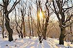 Beech Forest in Winter at Sunset, Kreuzberg, Rhon Mountains, Bavaria, Germany Stock Photo - Premium Royalty-Free, Artist: Raimund Linke, Code: 600-06144847