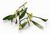 Sprig of mistletoe Stock Photo - Premium Royalty-Freenull, Code: 659-06152091