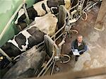 Farmer working in milking parlor Stock Photo - Premium Royalty-Free, Artist: Ascent Xmedia, Code: 649-06164955