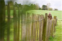 Man standing by fence in a field Stock Photo - Premium Royalty-Freenull, Code: 6108-06167141