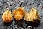 Four physalis on wet wood Stock Photo - Premium Royalty-Free, Artist: Arcaid, Code: 659-06187460