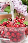 Cherries being washed under running water Stock Photo - Premium Royalty-Free, Artist: ableimages, Code: 659-06188367