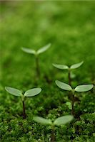 sprout - Saplings In Moss, Green Stock Photo - Premium Royalty-Freenull, Code: 622-06191223