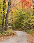 Lane through autumn woods Stock Photo - Premium Royalty-Free, Artist: Blend Images, Code: 635-06192292