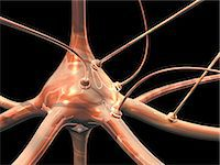 synapse - Neuron and synapses, computer artwork Stock Photo - Premium Royalty-Freenull, Code: 679-06198327