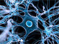 synapse - Nerve cells, computer artwork. Stock Photo - Premium Royalty-Freenull, Code: 679-06198841